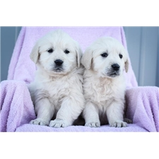 View full profile for Blessed Beginning Puppies