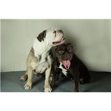 View full profile for J&S Brodhacker Bulldogs