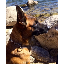 View full profile for Big Bear Mountain Dogs