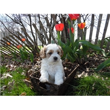View full profile for Marmaepuppies