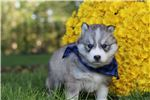 Picture of Champion lined husky male