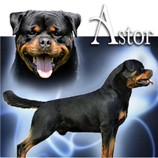 View full profile for Black Star Rottweilers