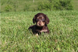 Picture of AKC Peanut