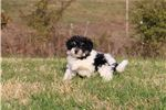 Picture of AKC ZOEYY