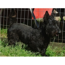 View full profile for Southern Scotties
