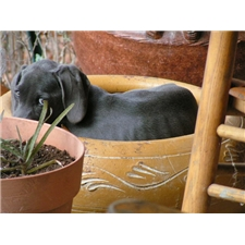 View full profile for Missouri Weimaraners