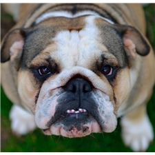View full profile for Diesel Bulldogs