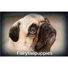 View full profile for fairytail puppies