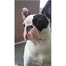 View full profile for Best Friend Frenchies