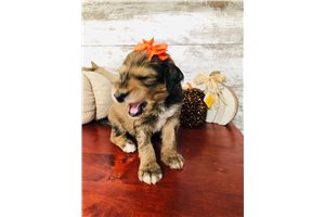 Picture of Pumpkin