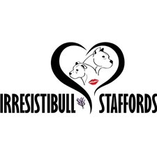 View full profile for Irresistibull Staffords And Amstaffs