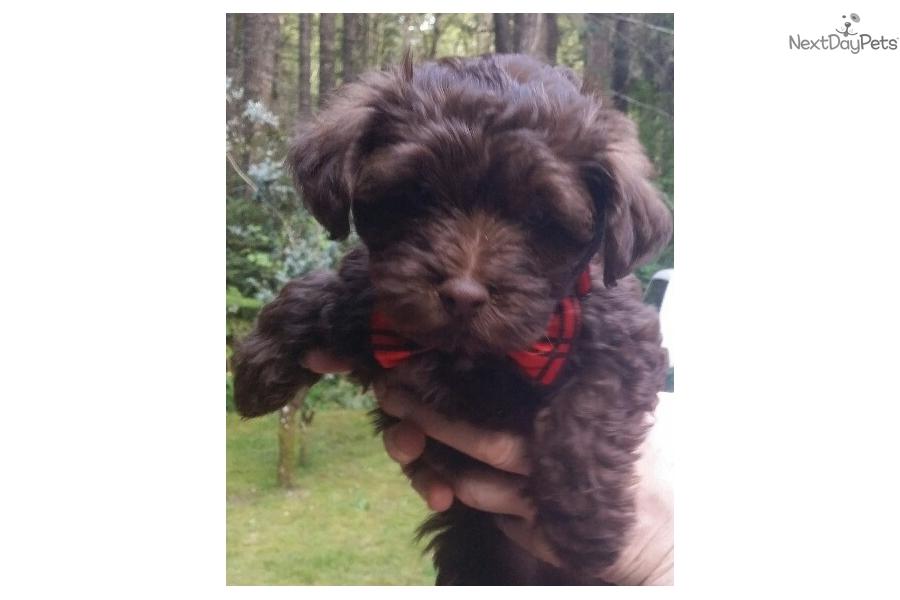 Kodiak Mixedother Puppy For Sale Near Seattle Tacoma