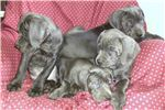 Picture of gorgeous big pups