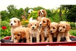 Picture of sweet little puppies