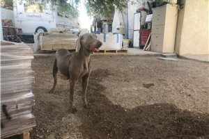Fency Willow Spr | Puppy at 5 years of age for sale