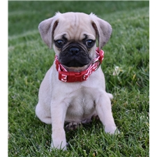 View full profile for Pug Love