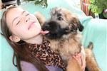 Picture of  Happy, Cheerful Puppy Who Adores Children!