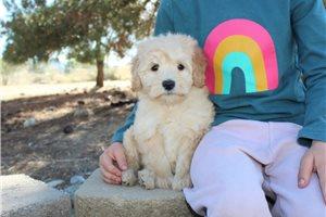 Picture of Blonde Mini