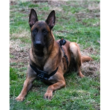 View full profile for Redbush K9