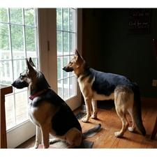 View full profile for Dragoo's Shepherds