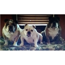 View full profile for Hazel's Bulldogs