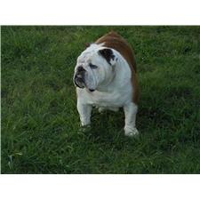 View full profile for Vassar Bulldogs