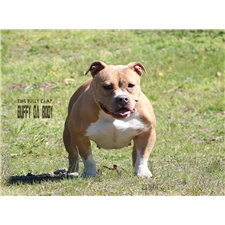 View full profile for 856 King Bully Kamp