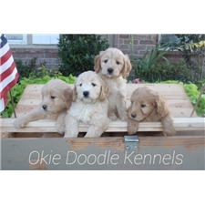 View full profile for Okie Doodle Kennels