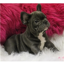View full profile for Pure Frenchies