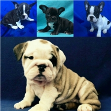 View full profile for Bulldogs 4Ever