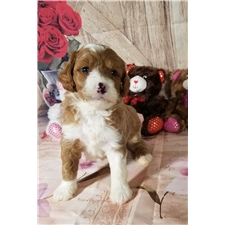View full profile for Social Puppies