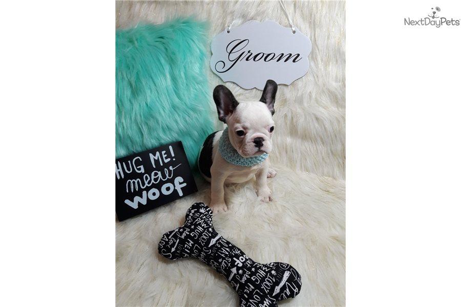 Boy 2: French Bulldog puppy for sale near Boston
