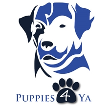 View full profile for Puppies 4 Ya