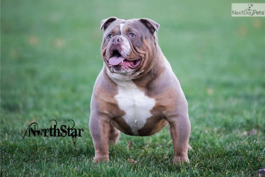 Trained Dogs For Sale In Cleveland Ohio