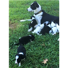 View full profile for Rockin' Hth Border Collies