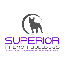 View full profile for Superior French Bulldogs, Llc