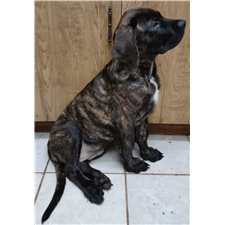 View full profile for Jtkmastiffs Of Southhaven