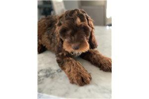 Picture of Mini Sully