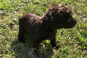 Picture of Female pup