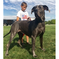 View full profile for Majestic Danes