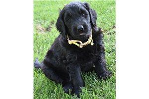 Picture of Sasha