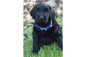 Picture of Duke