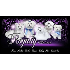 View full profile for Royalty Maltese