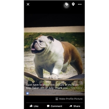 View full profile for Moodys Bully Babies