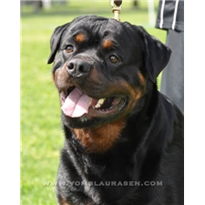 View full profile for Bolles Rottweilers