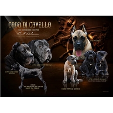 View full profile for Coda Di Cavallo