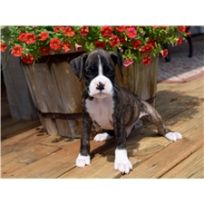 View full profile for Hanes Boxer Pups