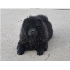 View full profile for Bosque Chows