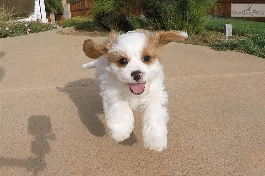 Dog Training San Diego Ca