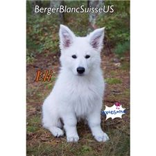 View full profile for Berger Blanc Suisse Us.Com